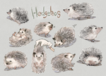 Hedgehog by aoki6311