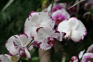 awesome orchids floriade 4 by ingeline-art