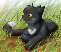 +Ravenpaw+ by Rogue-Fox