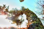 HDR tree and sky by BARITTOROBO