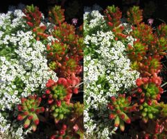 Stereograph - Odd Flowers by alanbecker