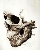 Skull by ReverendHashbrownz