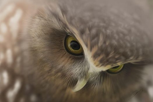 Morepork Painting by Packwood