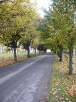 Sunny autumn road by Cat-in-the-Stock