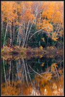 Bathing of Fall by IgorLaptev