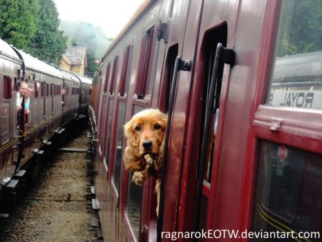It's a dog on a train by RagnarokEOTW