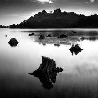 Lake's stumps by marcopolo17
