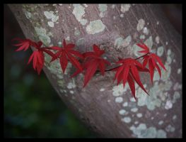 new leaves 03 by photom17