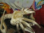 Facehugger love by LittlestMonster