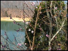 First Blooms of Spring by Tzolkin
