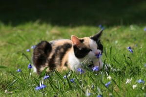 Fragrance of a scilla by Trackline