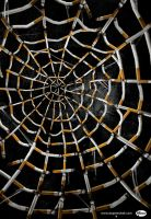 quit smoking-spiderweb by cecilliahidayat