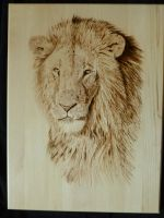 Lion by MontanaJohnsons