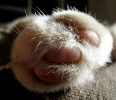 Cat paw by recentrunes