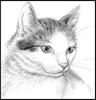 My kitty by Amarevia