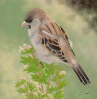 Sparrow in the Morning by BunnyFroofroo