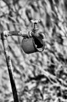 thirst by Lk-Photography