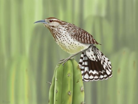 Cactus Wren Bird (my paint version) by gusvader