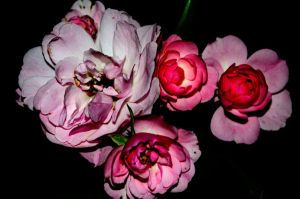 Roses in the dark by Risigma