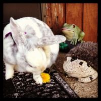 The Bunny, The Frog, The Hedge Hog And A Flower by Flyinfrogg