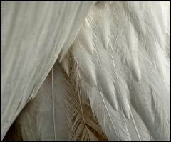 Pelican Feathers by Somebody-Somewhere