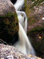 flowing free by jesse-botanical