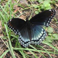 Another Butterfly by Della-Stock