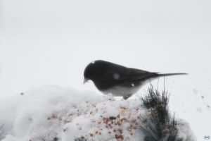 Snowy Birds Series #4 by LifeThroughALens84