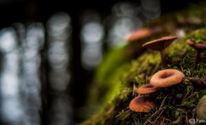 Mushrooms by CJacobssonFoto