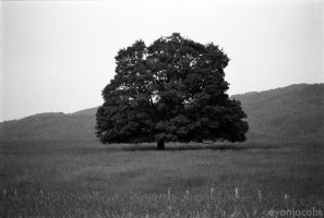 Michigan Tree by evanjacobs