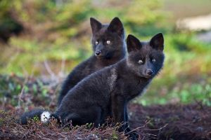 Baby Foxes - Moments Ago 3 by Witch-Dr-Tim