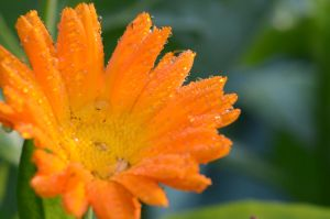 Stock: Orange Flower by Think-Outside-Of-Box