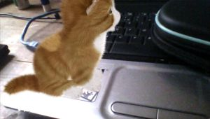 Aabs Animals PS Vita - Cat On My Laptop Meowing by DazzyDrawing