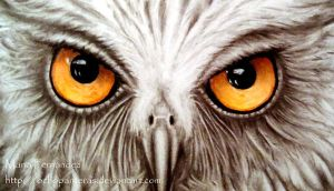 Detail Owl by ochopanteras