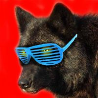 Shutter Shades Wolf Icon by Scubacat17