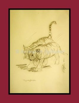 studies of tigers 04 by figlhuber