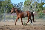 DWP FREE HORSE STOCK 16 by DancesWithPonies