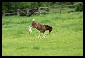 Clydesdale Foal IV by LHufford