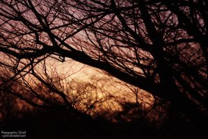Branches at dusk by Z-GrimV
