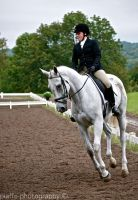 Grey Dressage II by EquusPhoto