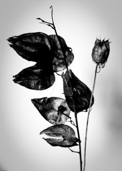 Dead Flower 1 by CoreSect