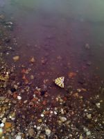 Butterfly on water by simontimi