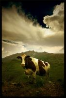 Just a cow by leonard-ART
