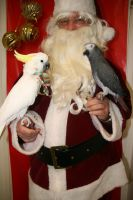 Santa with Birds 4 by Shiskababe