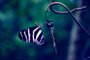 Butterfly Love by Delton36712