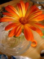 flower orange by MichaelQue