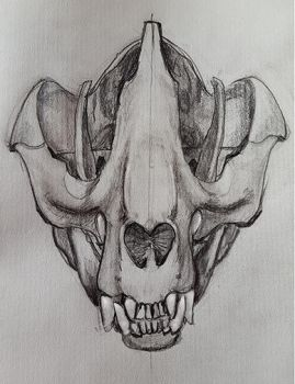 Front View Panda Skull by LocationCreator