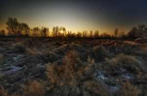cold sunshine by Analil