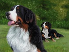 Bernese Mt. Dogs by PsychicPsycho