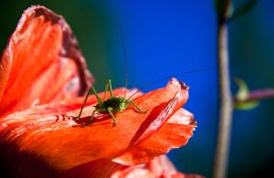 The Kingdom of Grasshoppers by RLPhotographs
